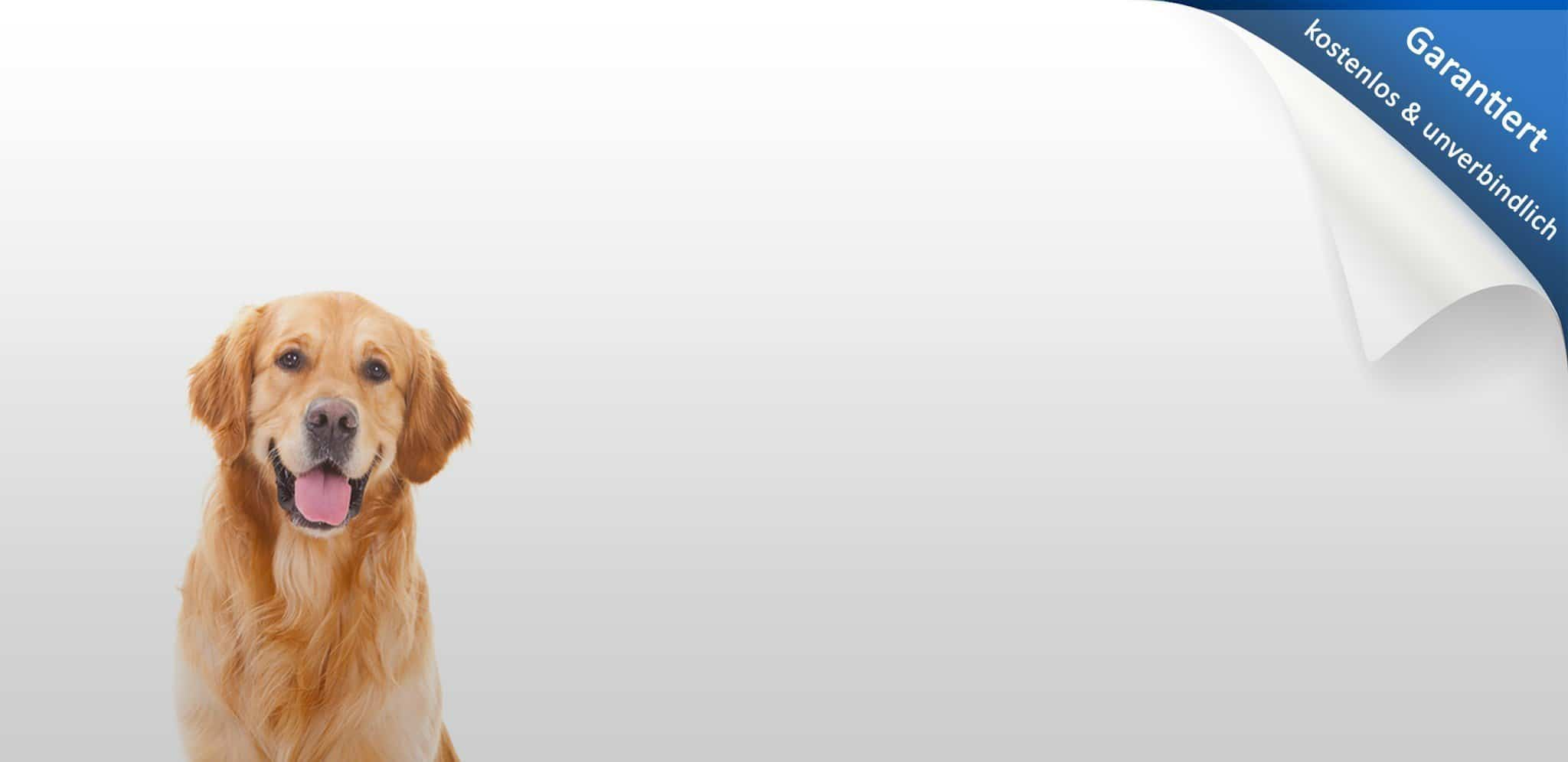 Hundehaftpflichtversicherung vergleichen